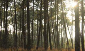 Foret avec des arbres sous le soleil couverture livre kaplinski recueil