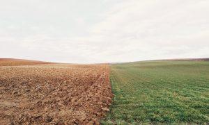 immigration débat d'idées, champs, terre, culture, institut français