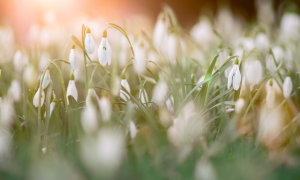 apéro printemps