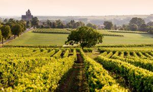 Sissejuhatus prantsuse veinikultuuri
